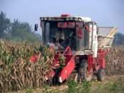 山东玉米收获近半 已收获2337万亩