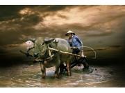 """细数我国农业机械化发展6大""""失衡""""点"""