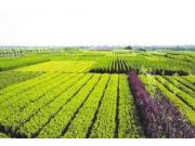 浙江省5.7亿元助力农业现代化