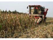 玉米临储价格调低:改革阵痛不能全由农民承担