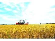 河南种粮大户多举措提升土地综合收益