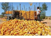 进一步完善玉米生产者补贴制度