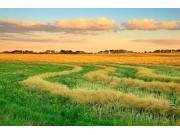 """优化我国""""地利""""条件 驱动农机行业发展"""