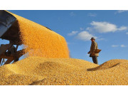 吉林省粮食生产再获丰收 总产达743亿斤