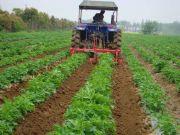 我国如何推进蔬菜农业机械化又好又快生产?