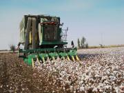 棉花机采和人工采哪个好?