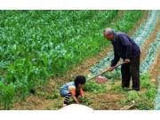 """告诉你一个真实的农村:""""80后""""不会种地,""""90后""""不提种地"""