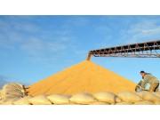 夏粮收购即将全面展开 各地农发行全力支持夏粮收购