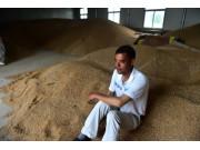 """安徽:小麦品质受损 农民遭遇""""卖粮难"""""""