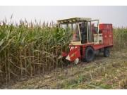小身材,有韧性——河北冀新4YZ-3(剥皮型)玉米收割机