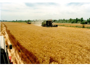 """粮食行业将推新模式 """"产购储加销""""创新经营"""
