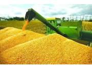 2016年的玉米收购价格详解