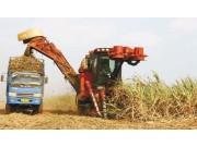 我国甘蔗收割环节急需突破机械化瓶颈