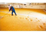 玉米丰收在望 激活市场该靠啥?
