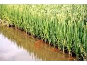 全国稻田综合种养面积达1200万亩