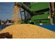 调减籽粒玉米3000万亩,农业供给侧改革放开了步子