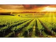 2016年中国农业十大关键词