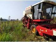 雷沃谷神GM80,使玉米收获进入籽粒直收时代