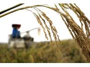 从秋粮丰收看我国农业供给侧结构性改革成效