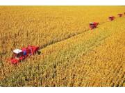 玉米大增产,机手要涨价,村支书犯难