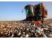 国库今年不再收购新棉 棉花市场受影响