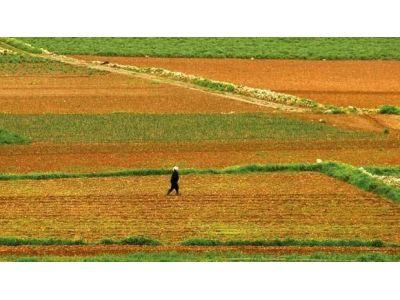 我国公布第三次全国农业普查主要数据公报(第一号)