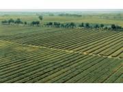 河北耕地保有量设限 不低于9080万亩