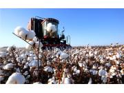 我国深化新疆棉花目标价格改革