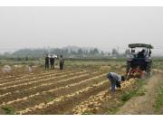 天津市首次将块茎类播收机械纳入补贴