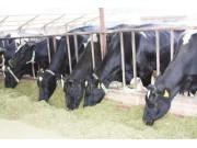 畜牧机械生产企业将迎来发展黄金期