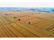 """""""收割机指数""""绘就中国麦收新图景"""