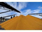 玉米收储改革提速 价格回归真实水平