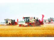 河北小麦跨区机收三大变化