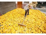 玉米进口量暴增6倍!推动玉米价格下跌的黑手还有谁?