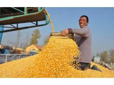 说说2018年全年玉米价格走向
