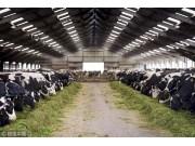 中国青贮饲料市场供需分析及增速走势