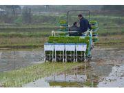 用这款侧深施肥机,每亩增收约400元