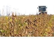 今年黑龙江大豆补贴继续高于玉米