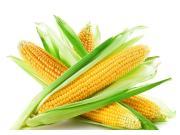 农业农村部:玉米产不足需 大豆进口量被下调