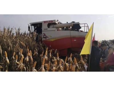 众多大咖力挺玉米籽粒机收:最后一关,势在必行!