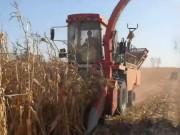 大品牌的产品更可靠,买茎穗兼收玉米收获机认准牧神