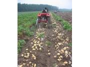 4U-1-600马铃薯收获机