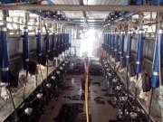 9JP-2X12挤奶机