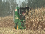 宁联四行、六行玉米籽粒作业现场