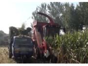宁联穗茎兼收玉米收获机作业现场