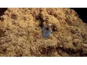 博林特9立方切割稻草立式搅拌内部场景作业视频