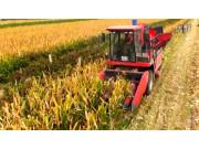 牧神4YZB-6自走式玉米联合收获机工作视频