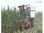 沃德4Y-4背负式玉米收获机作业视频