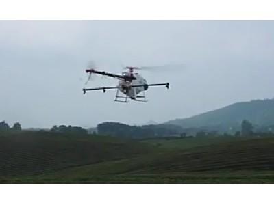 天鹰植保无人机在贵州湄潭万亩茶园叶面肥喷施作业视频