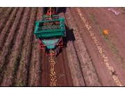 希森天成4UQ-165马铃薯收获机作业视频